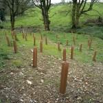 Plantation, Armagh/Louth Border, Disputed Territory, 2006